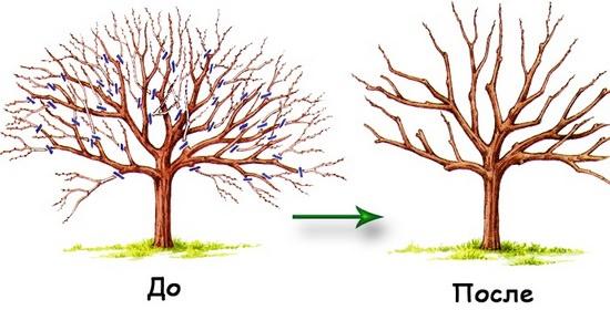 Практические советы по обрезке плодовых деревьев в саду