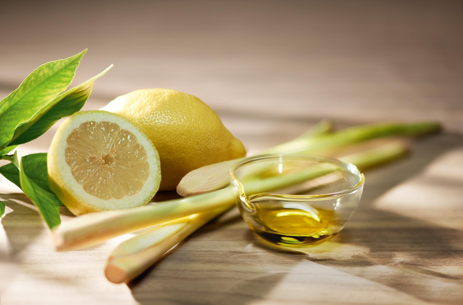 Лемонграсс: полезные свойства, область применения и особенности выращивания лимонного сорго