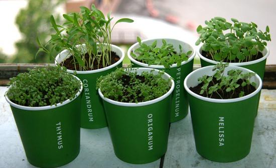 Как вырастить ароматный тимьян в домашних условиях и в саду