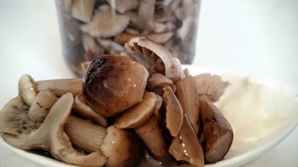 Как посолить опята: ТОП-4 вкусных рецепта
