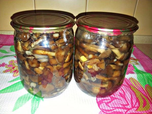 Рецепты маринованных маслят в домашних условиях