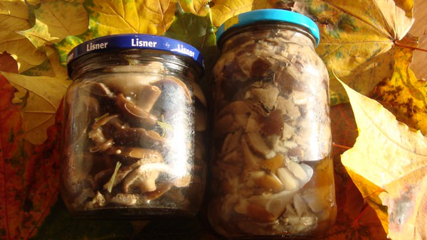 Валуи: рецепты консервирования на зиму