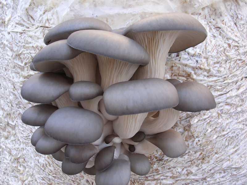 Весна в лесу: какие грибы появляются раньше всех