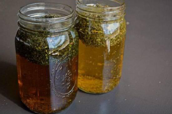 Матка боровая (ортилия однобокая): лечебные свойства, применение в народной и традиционной медицине