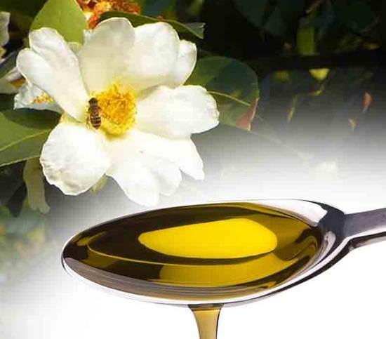Камелия китайская (чайный куст): полезные свойства и применение