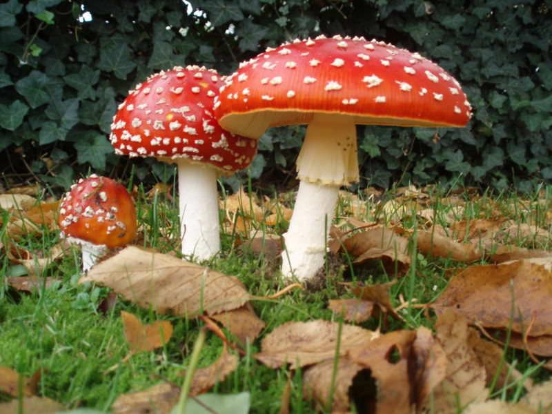 Виды грибов и грибные места Башкирии