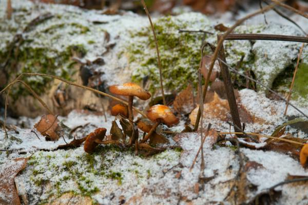 Съедобные и ядовитые грибы Ростовской области