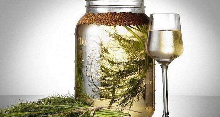 Кинза: как выглядит и чем полезна пряная трава