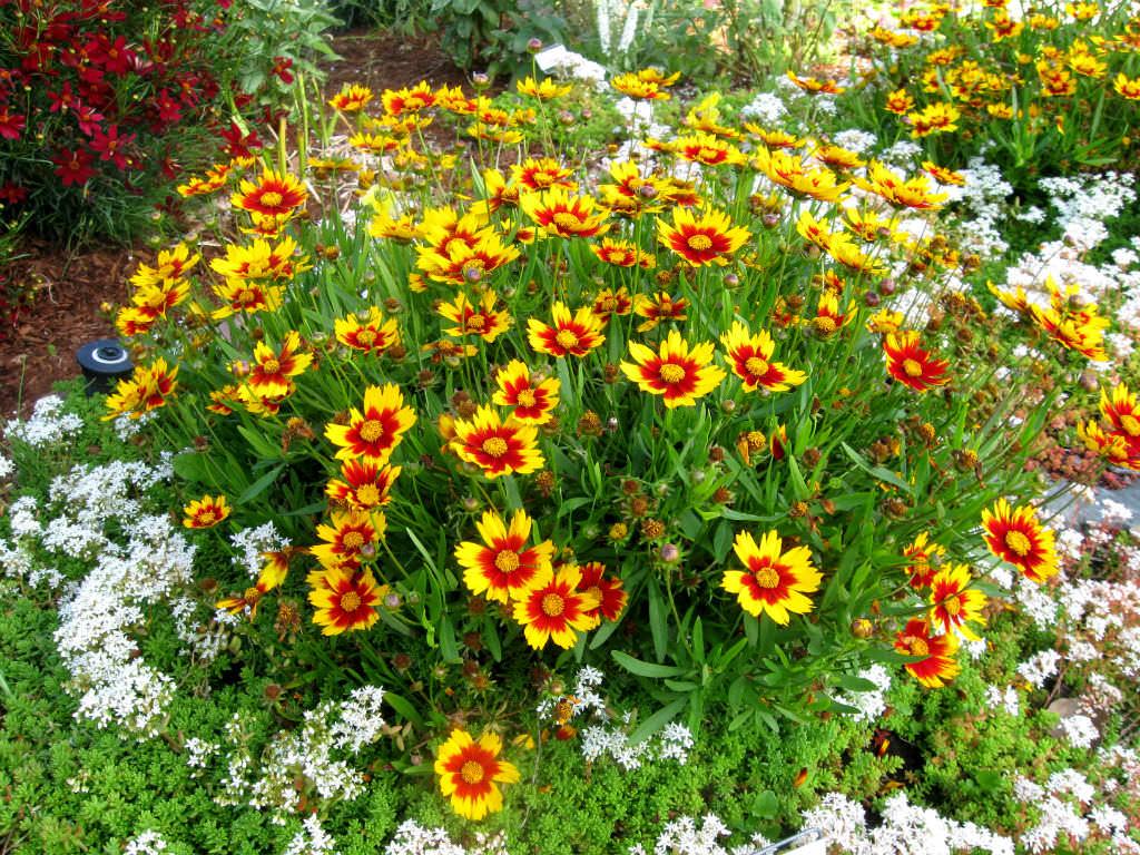 Какие многолетние растения выбрать для миксбордера
