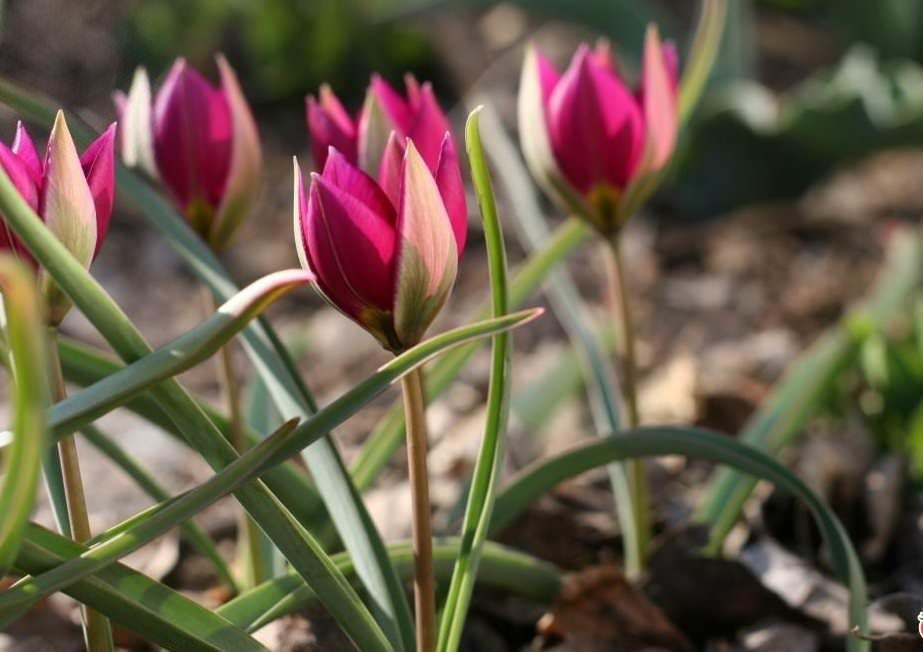 Цветочная страна: выбираем многолетние цветы для Урала и Сибири