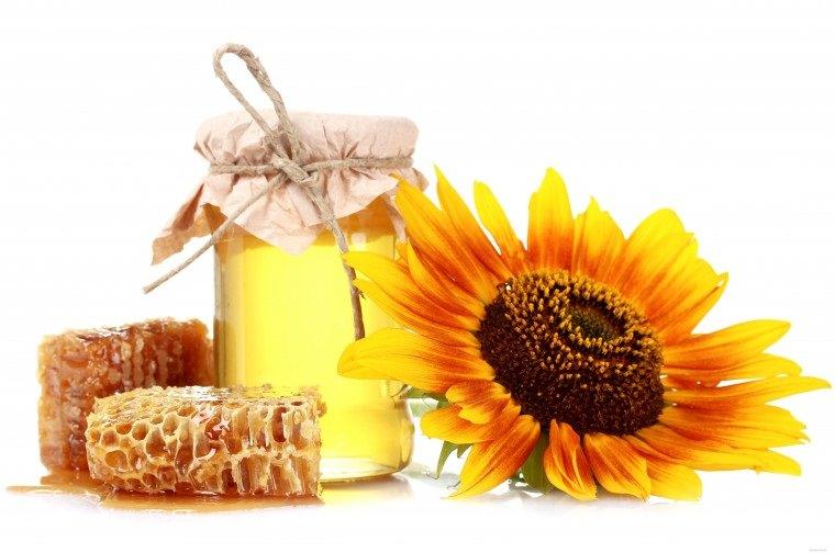 Подсолнечник масличный: лечебные свойства и применение в народной медицине