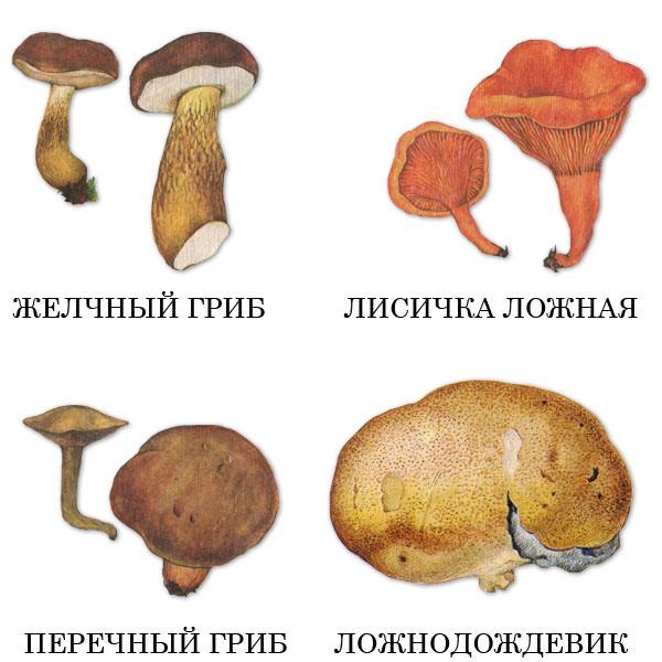 Съедобные грибы по временам года: для кого найдется место в корзинке весной, летом и осенью