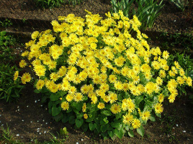 Выбираем теневыносливые растения для сада и огорода