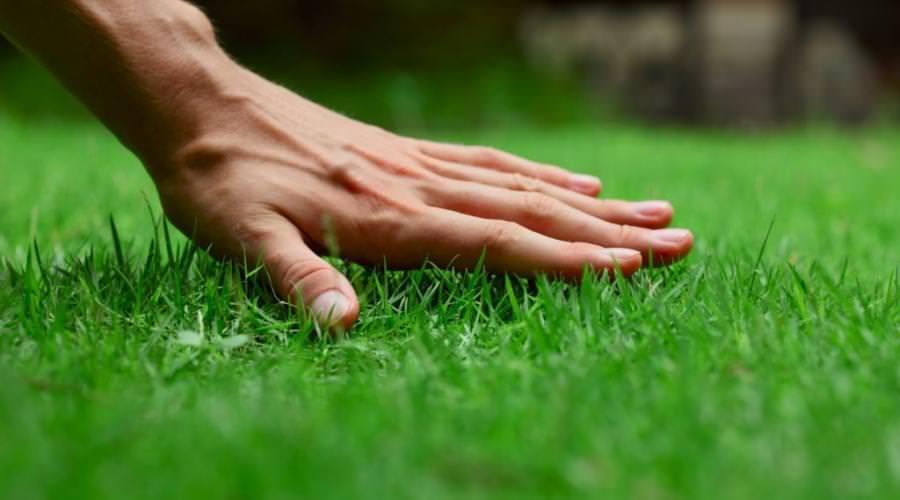 Особенности правильного ухода за газоном весной и летом