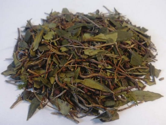 Зимолюбка зонтичная: лечебные свойства и способы применения травы