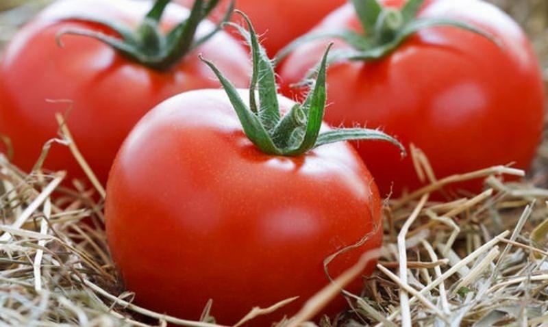 Крупноплодные томаты: лучшие сорта для выращивания в открытом грунте