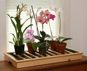 Поливать орхидеи в домашних условиях