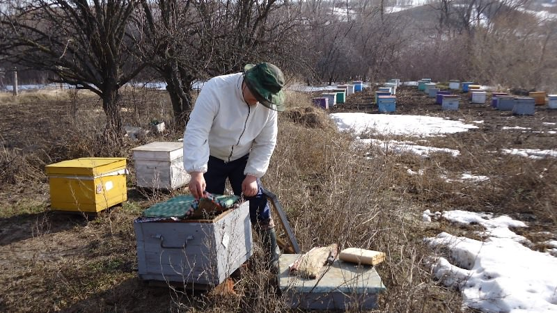 Пчеловодство для начинающих: основы организации пасеки