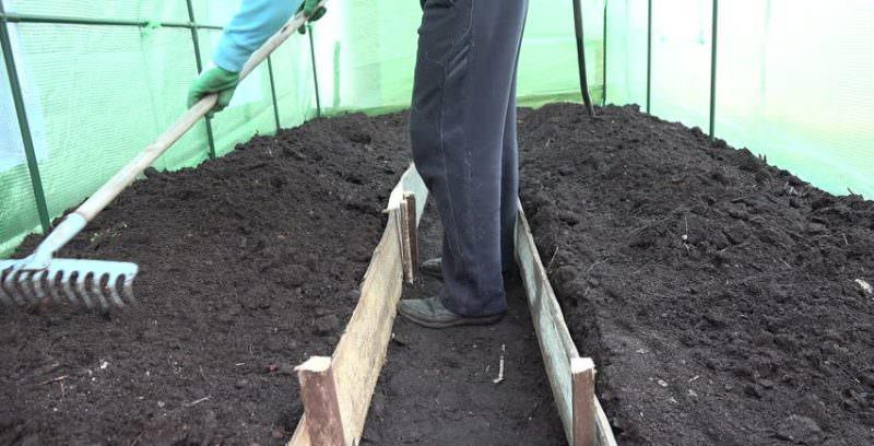 Как правильно сделать почву для томатов?
