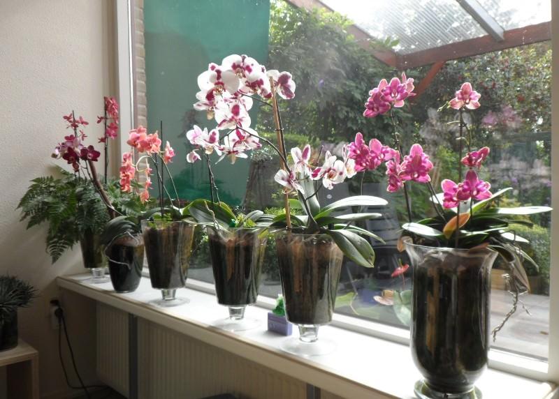 Домашнее цветоводство: как реанимировать орхидею