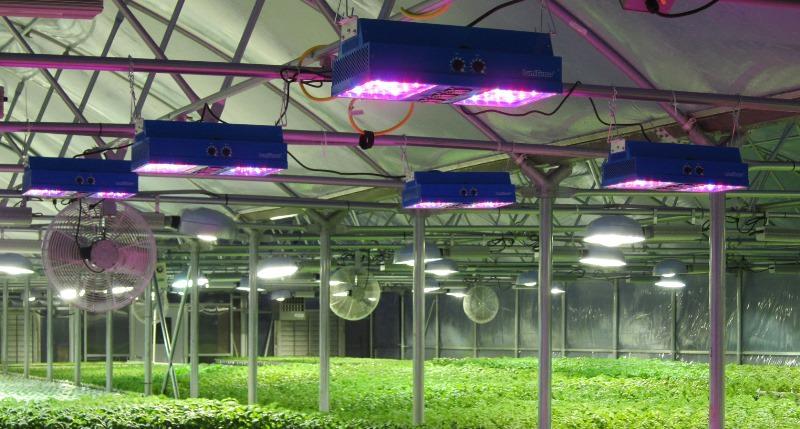 Изготовление светодиодного освещения для растений своими руками