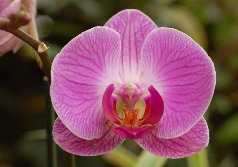 Основные виды орхидей: советы по выбору сорта для выращивания