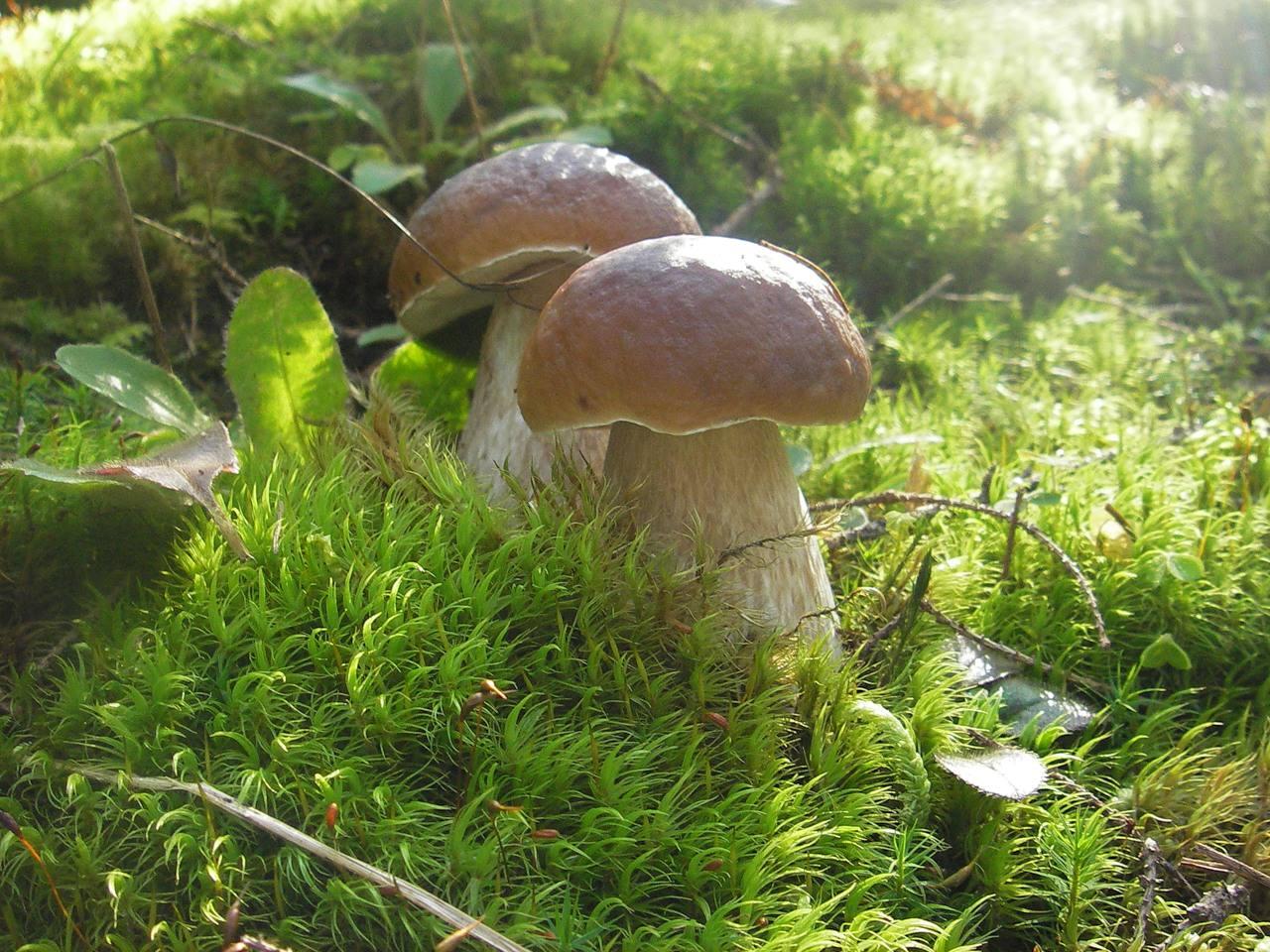 Разнообразие грибов Самарской области