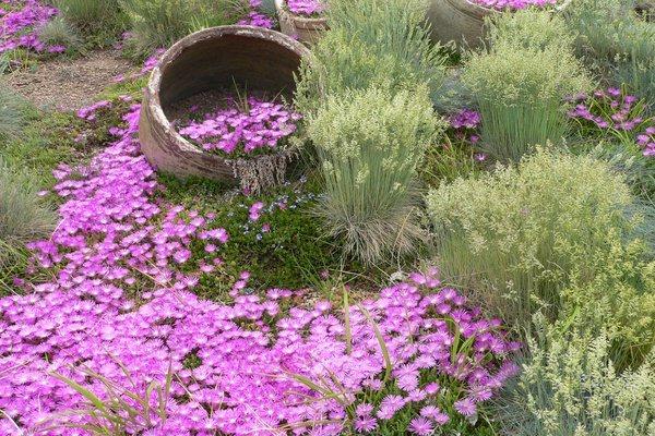 Лучшие цветы для оформления садовых и городских клумб