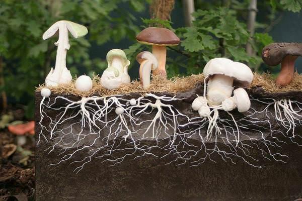 Все, что нужно знать у мицелии гриба