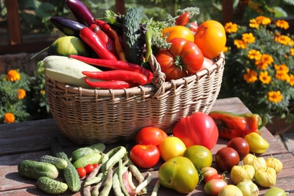 Осенние работы в огороде и саду