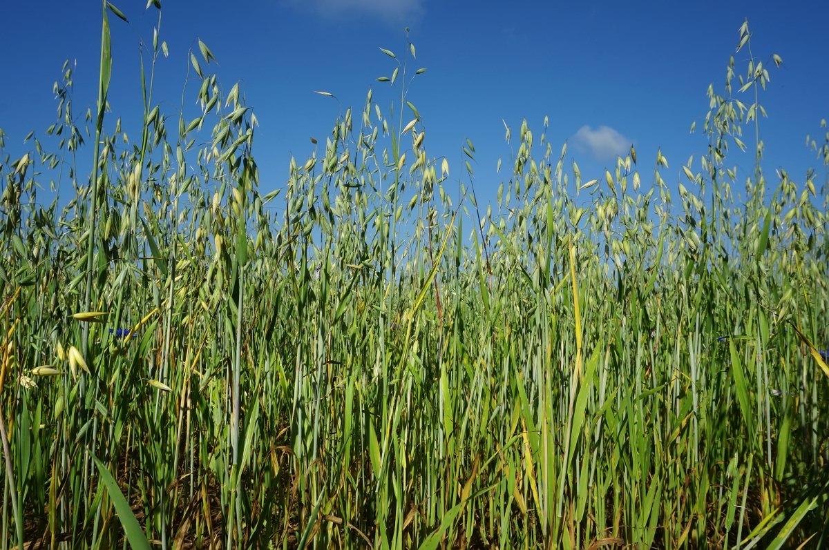 Особенности внесения удобрений на садовом участке осенью