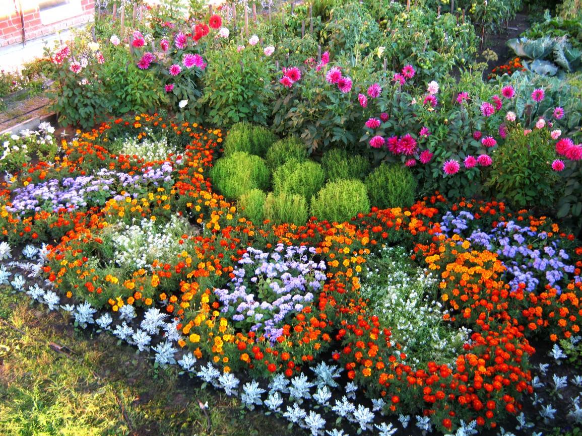 просто защелкивали, цветы в огороде фото и название уличные него