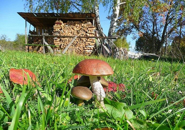 Советы дачнику: как вырастить грибы на садовом участке
