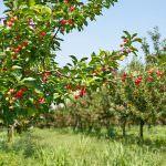 Земляника из семян — теория выращивания рассады