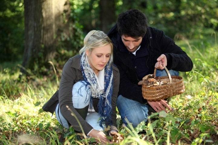 Как не попасть впросак во время тихой охоты: полезные рекомендации начинающим грибникам