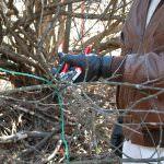 Жасмин уход осенью подготовка к зиме — Огород и прочее