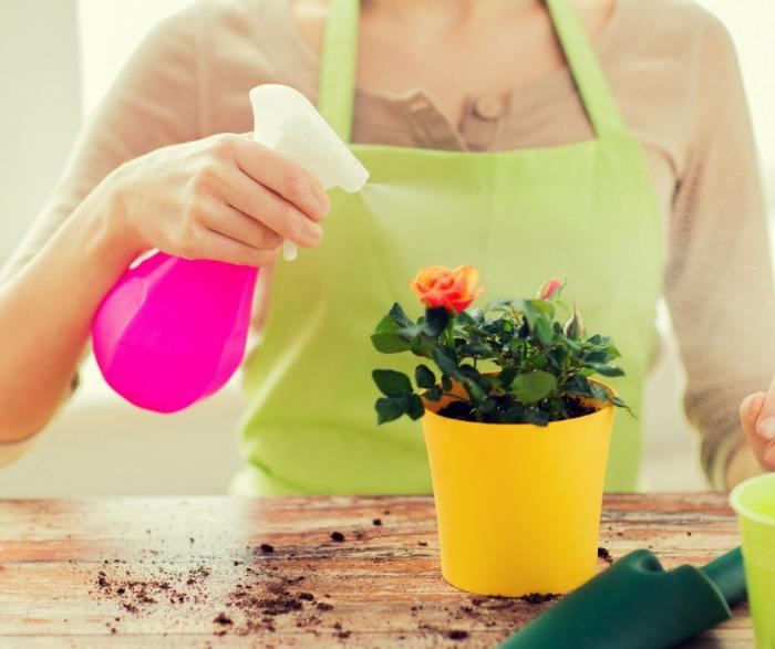 Удобрение Циркон: состав, назначение и инструкция по применению препарата для комнатных растений