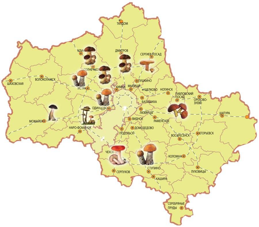 Самые грибные места Волгоградской, Тульской, Самарской и других областей России