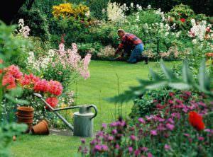 Особенности осеннего ухода за садовыми цветами