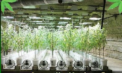 Гидропоника деревев видео иван федорович шмальгаузен
