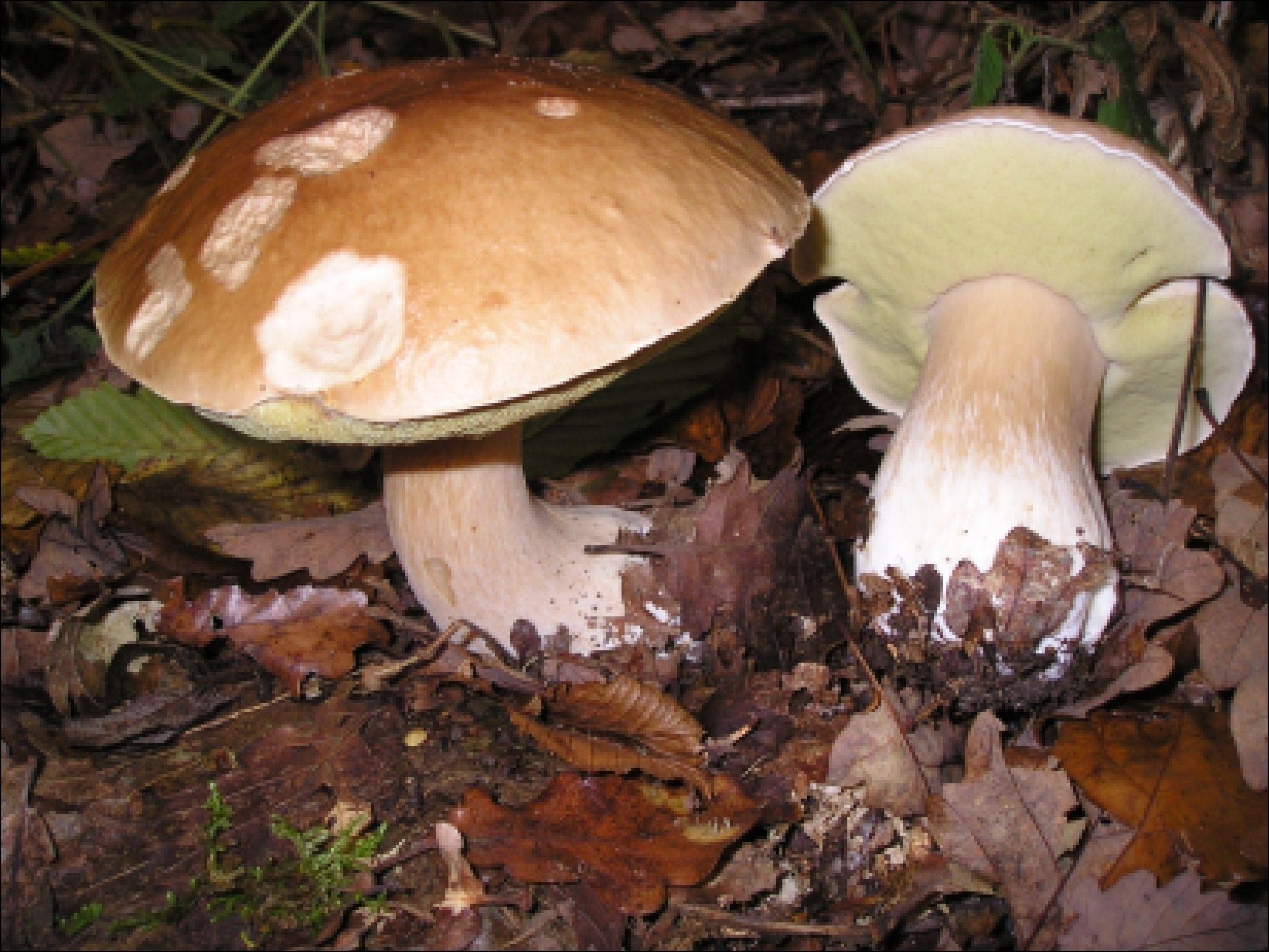 грибы башкирии фото