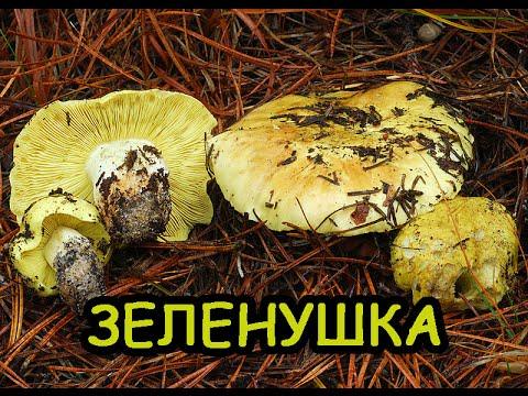 как мариновать грибы серушки зеленушки