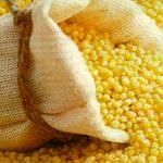 Выращивание зерновых культур