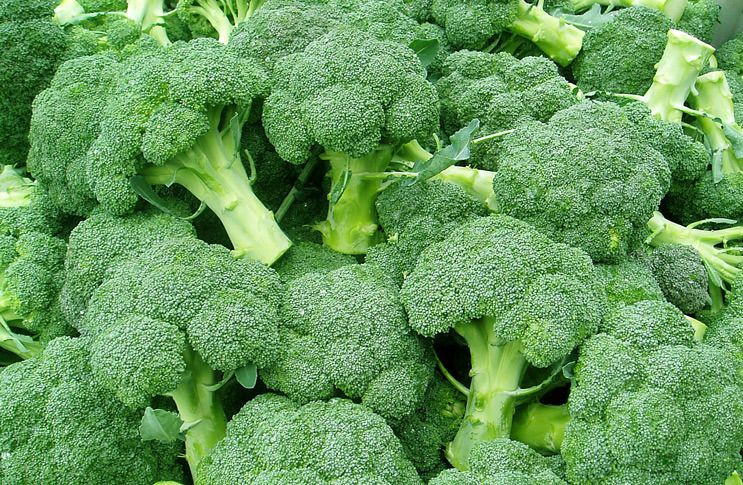 зимней агротехника выращивания капусты брокколи термобелье для детей