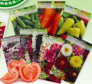 Выбор овощных семян: критерии, сроки хранения сырья