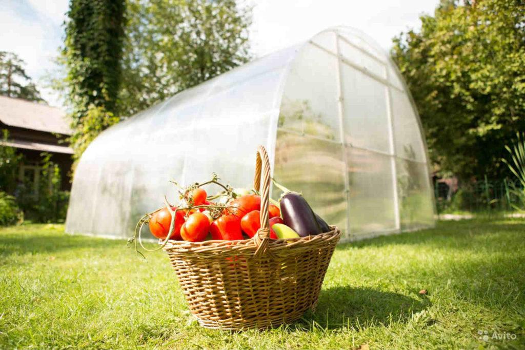Посадка овощей в теплицу из поликарбоната