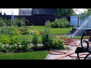 Как правильно выбрать газон для приусадебного участка