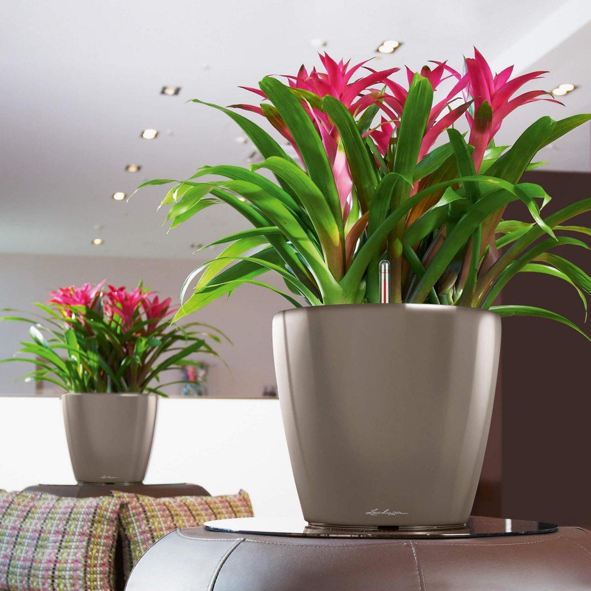 Полезные комнатные цветы