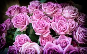 10 интересных фактов о цветах
