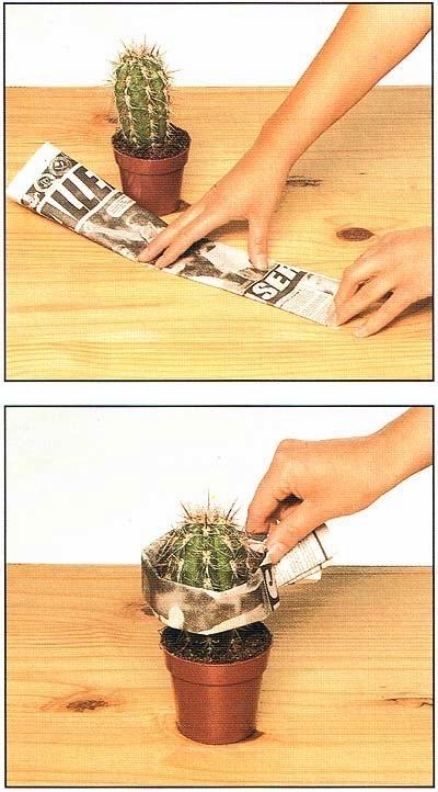 Как пересадить кактус, чтобы не уколоть руки и не повредить колючки